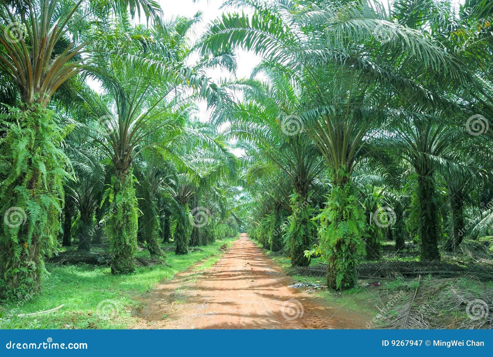 Oil Palm Estate
