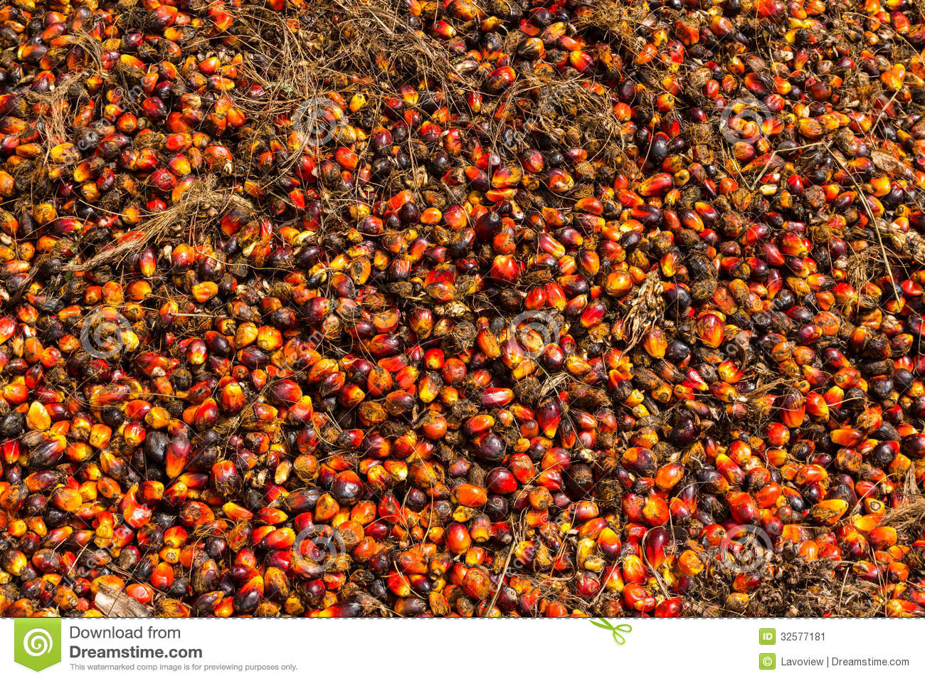 Oil palm fruits