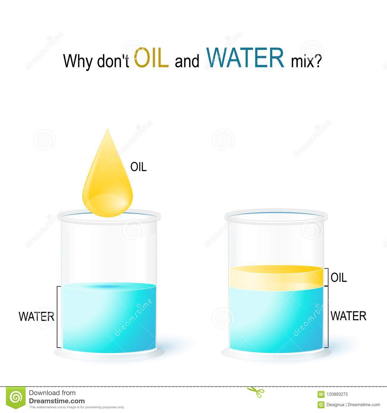 Oil And Water  School Experiment Stock Vector