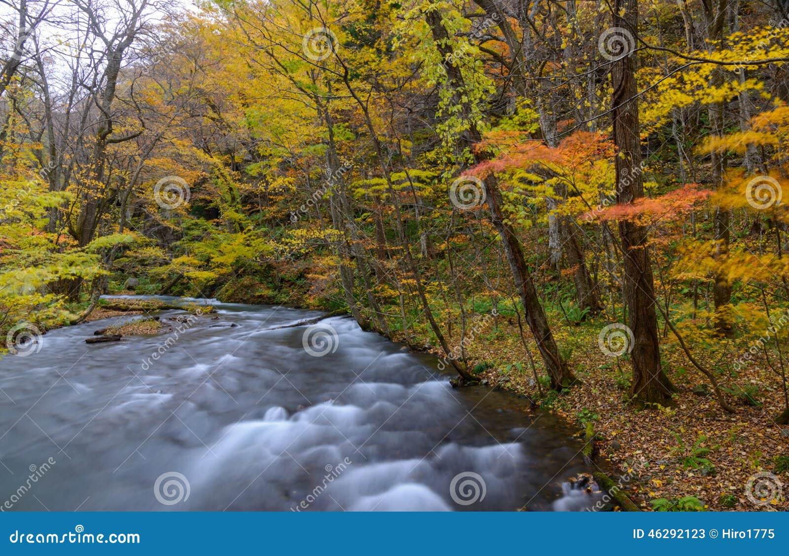 Oirase-Schlucht im Herbst, in Aomori, Japan