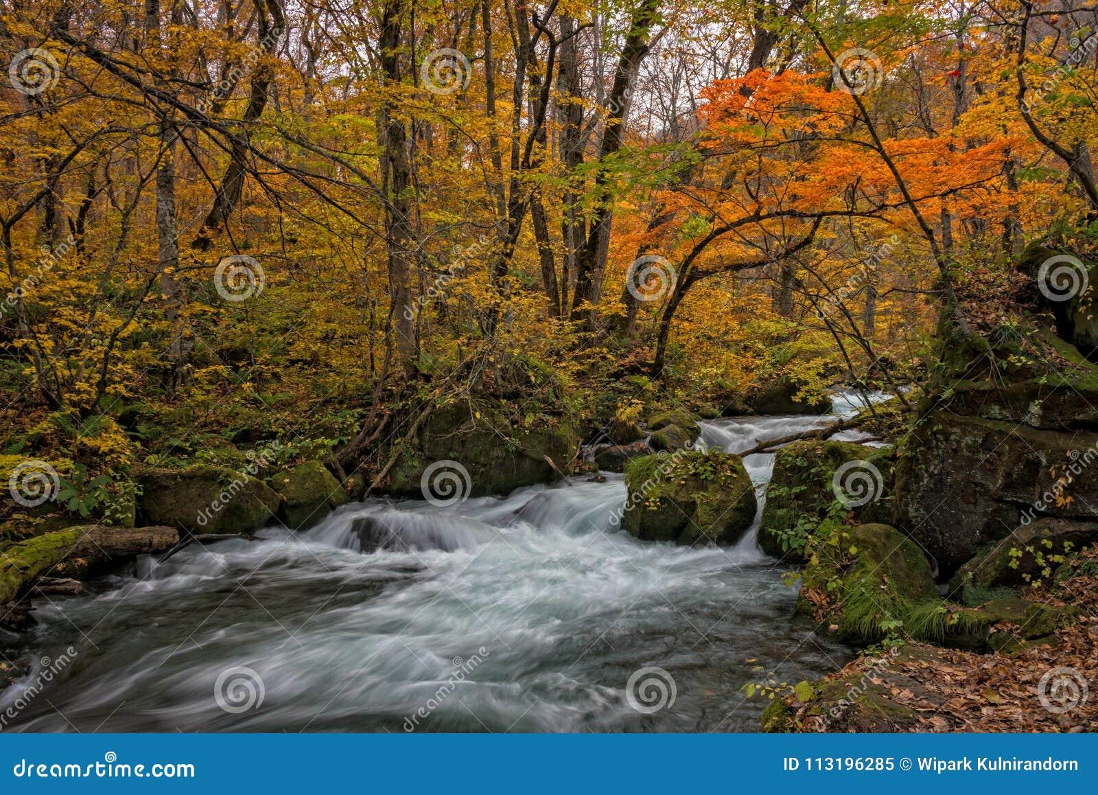 Oirase-Strom in der Herbstsaison
