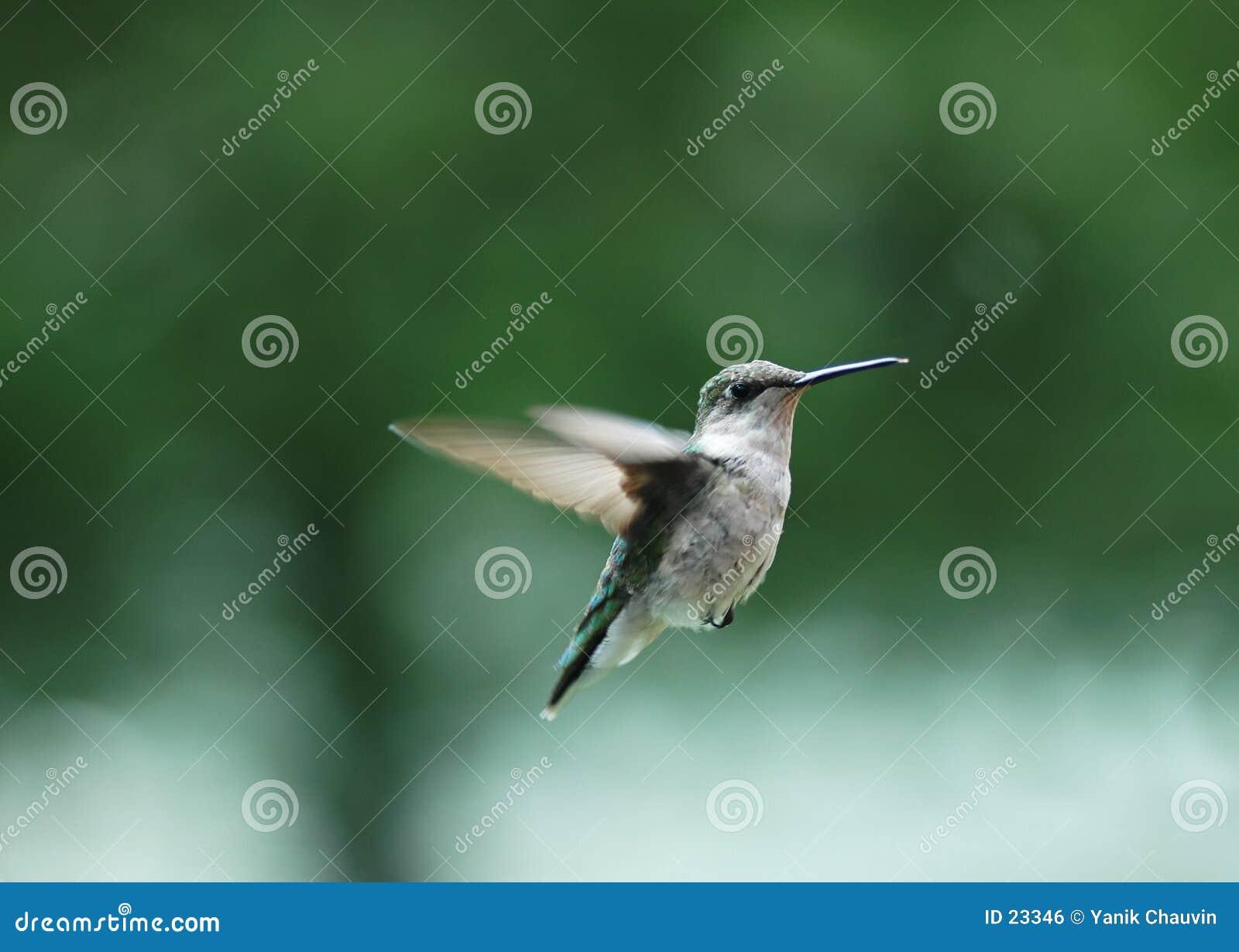 Oiseau 2 de ronflement