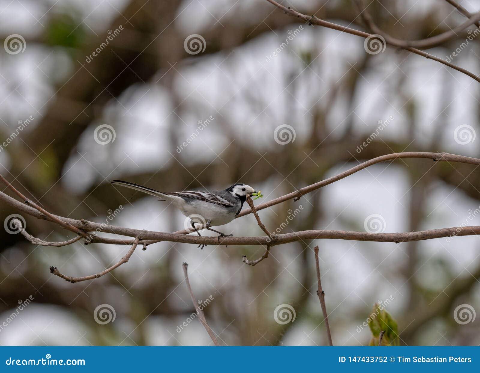 Oiseau avec des vers sur une branche