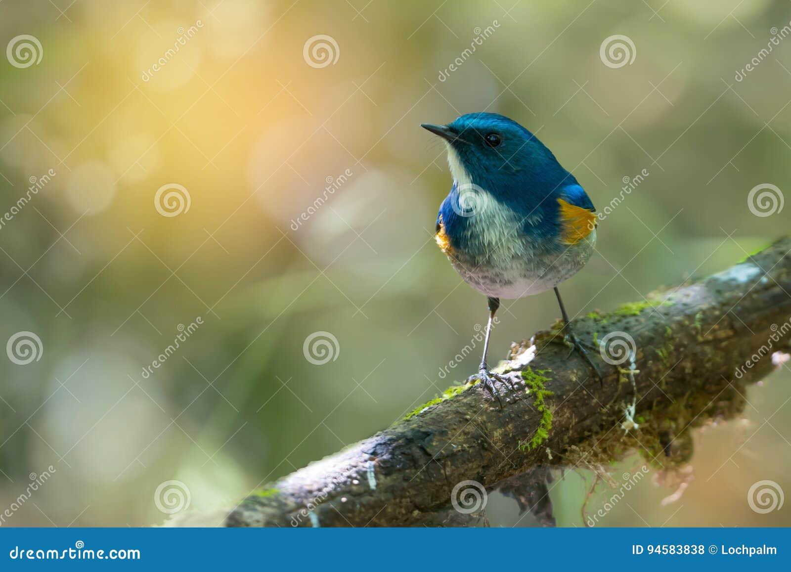 Oiseau avec du charme seul étant perché