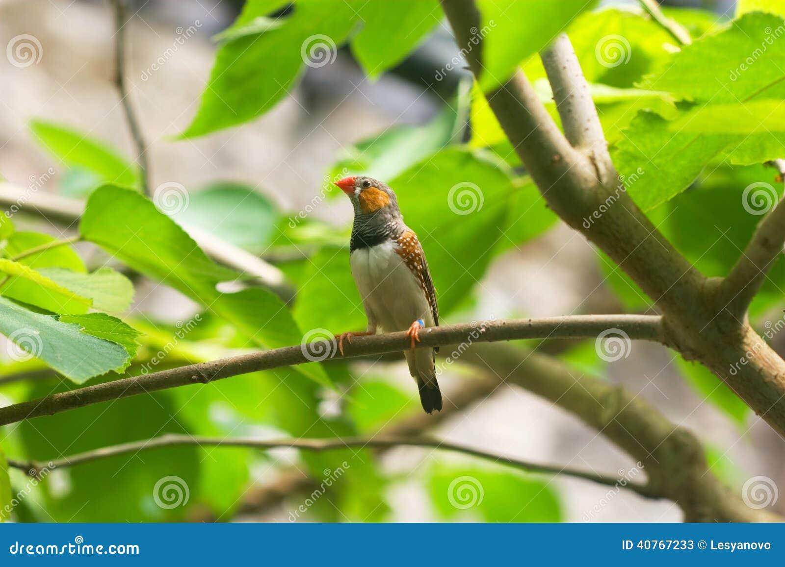 Oiseau avec le bec orange sur une branche d 39 arbre photo for Oiseau noir bec orange