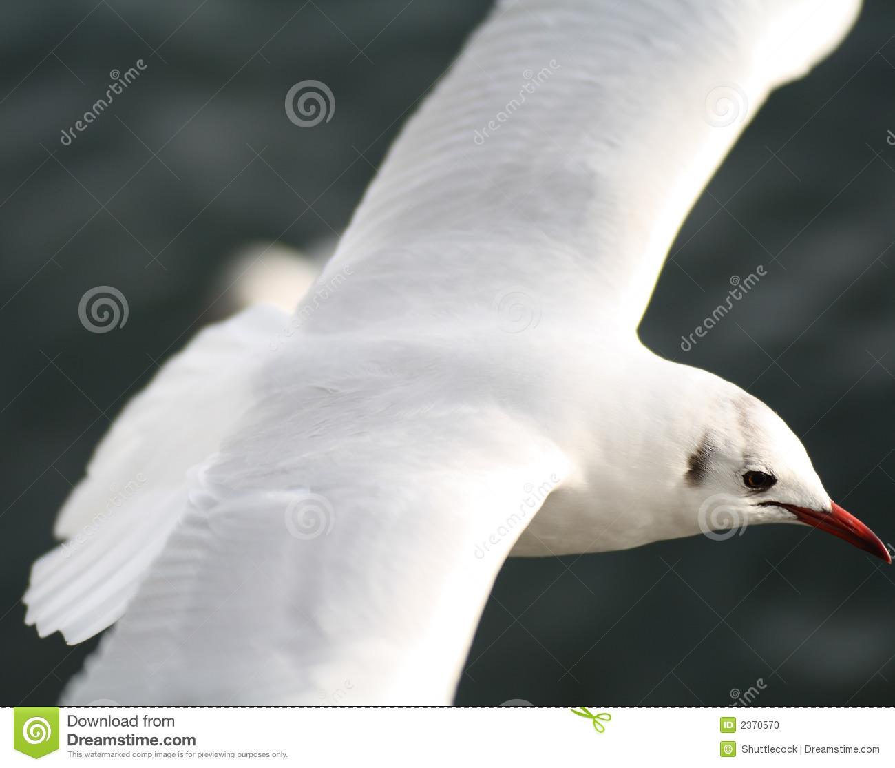 Oiseau blanc photo stock image 2370570 for Oiseau tout blanc