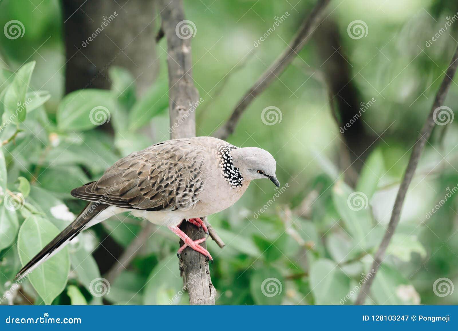 Oiseau (colombe, pigeon ou désambiguisation) dans une nature