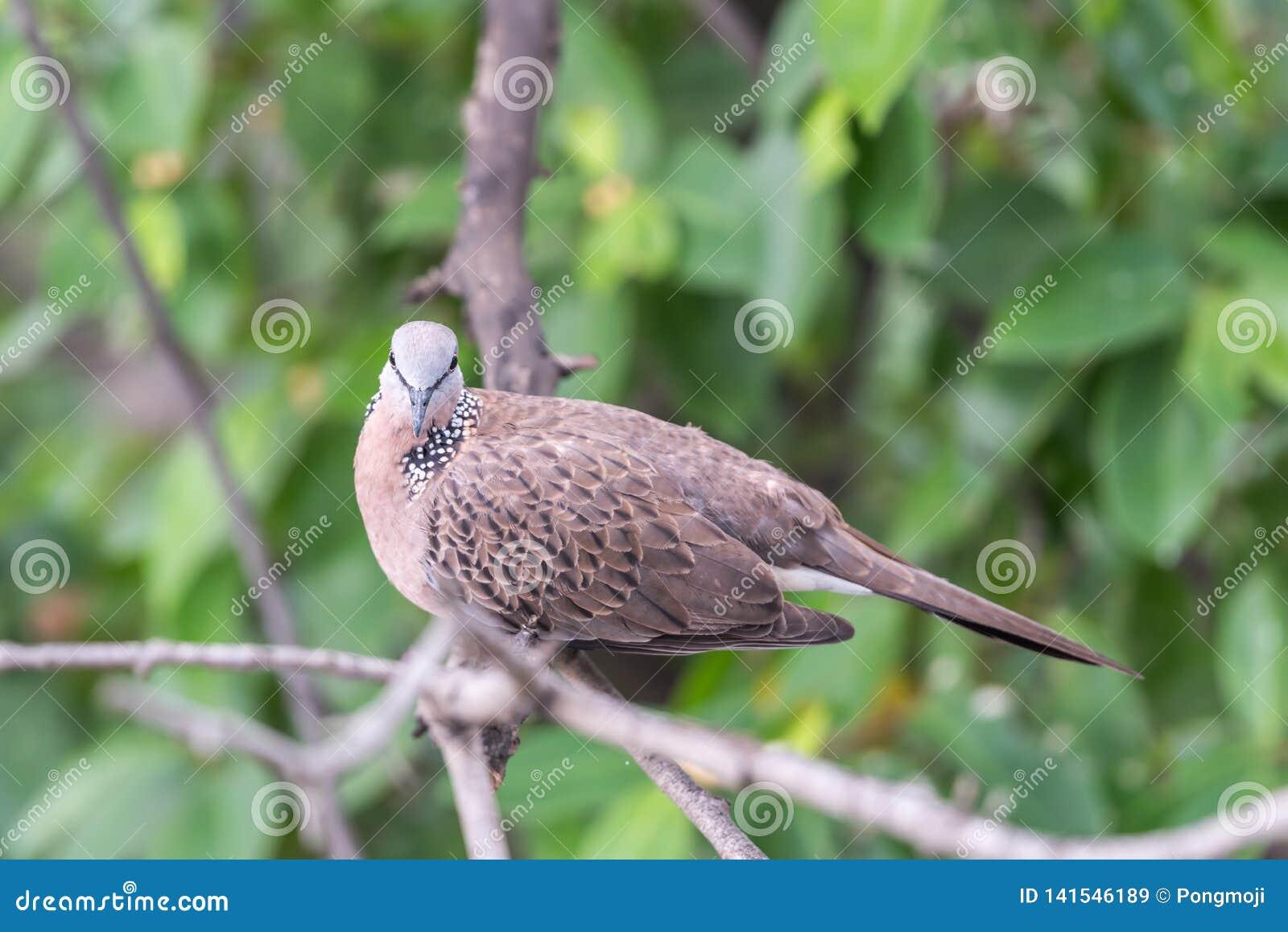 Oiseau (colombe, pigeon ou d?sambiguisation) dans une nature