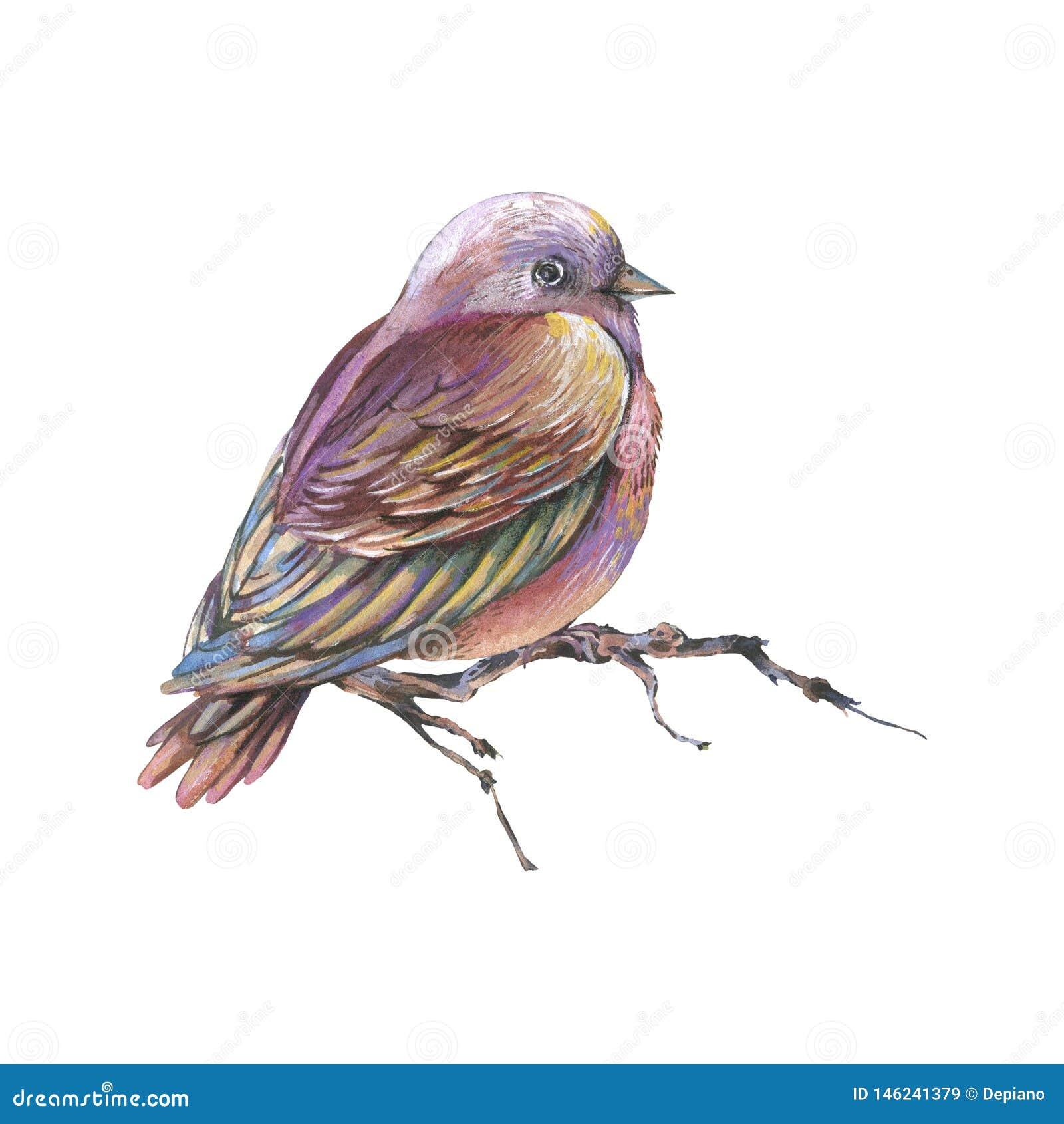 Oiseau d aquarelles de Brown sur une branche d isolement sur le fond blanc, illustration naturelle