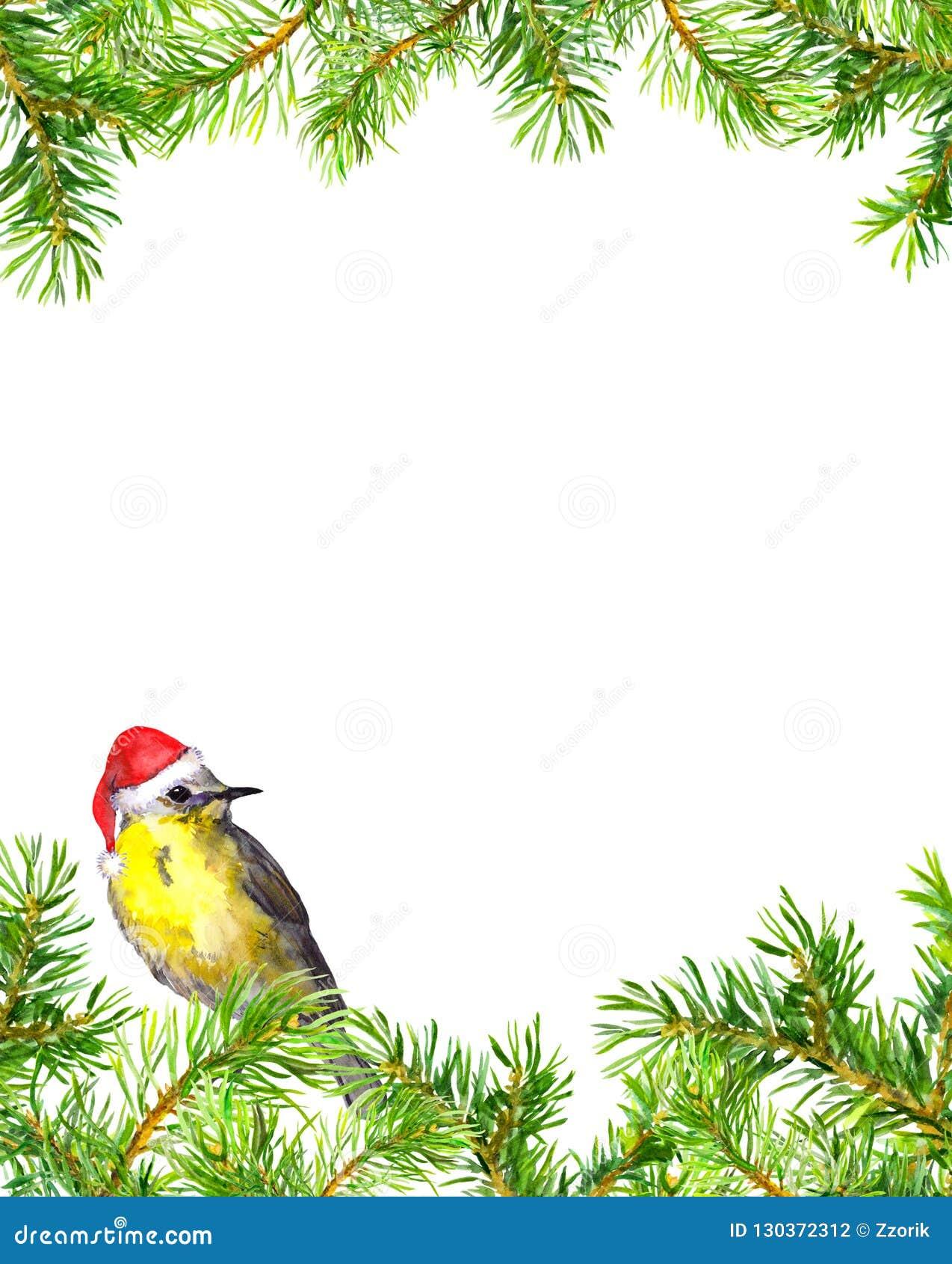 Oiseau dans le chapeau rouge de Noël, frontière de branches d arbre de sapin Carte de Noël watercolor