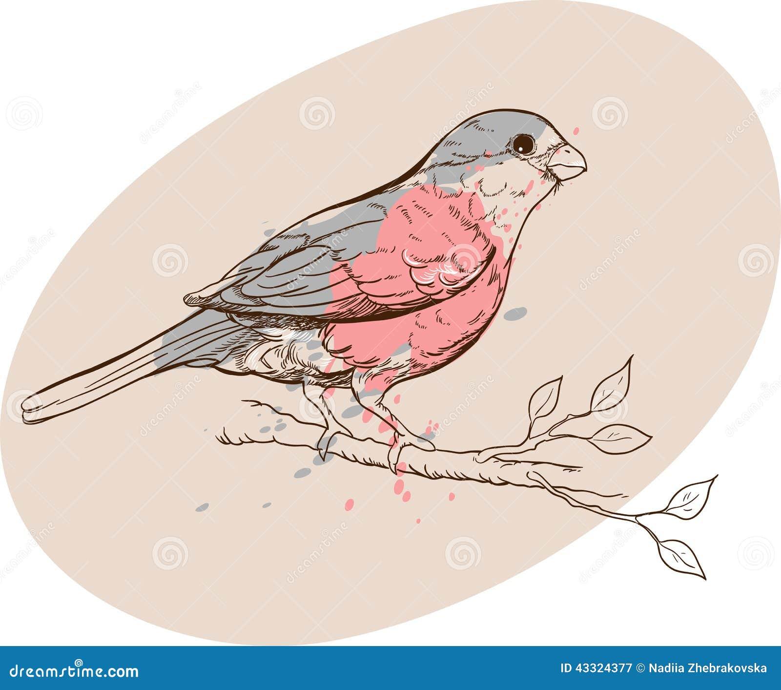 Oiseau De Bouvreuil Sur Une Branche Illustration De Vecteur