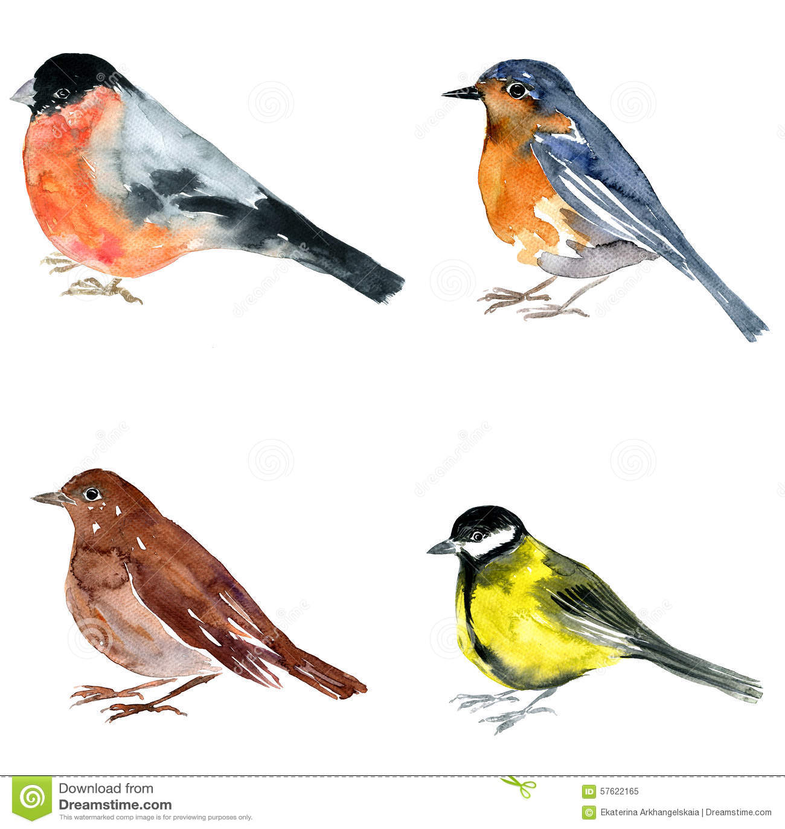 Oiseau de dessin d 39 aquarelle illustration stock - Dessin d oiseau ...