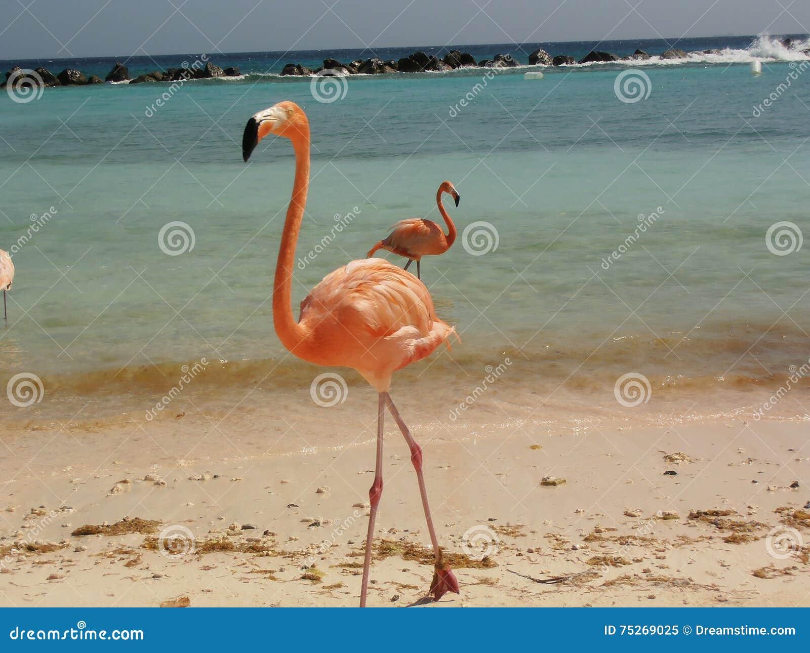 Oiseau de Flamengo