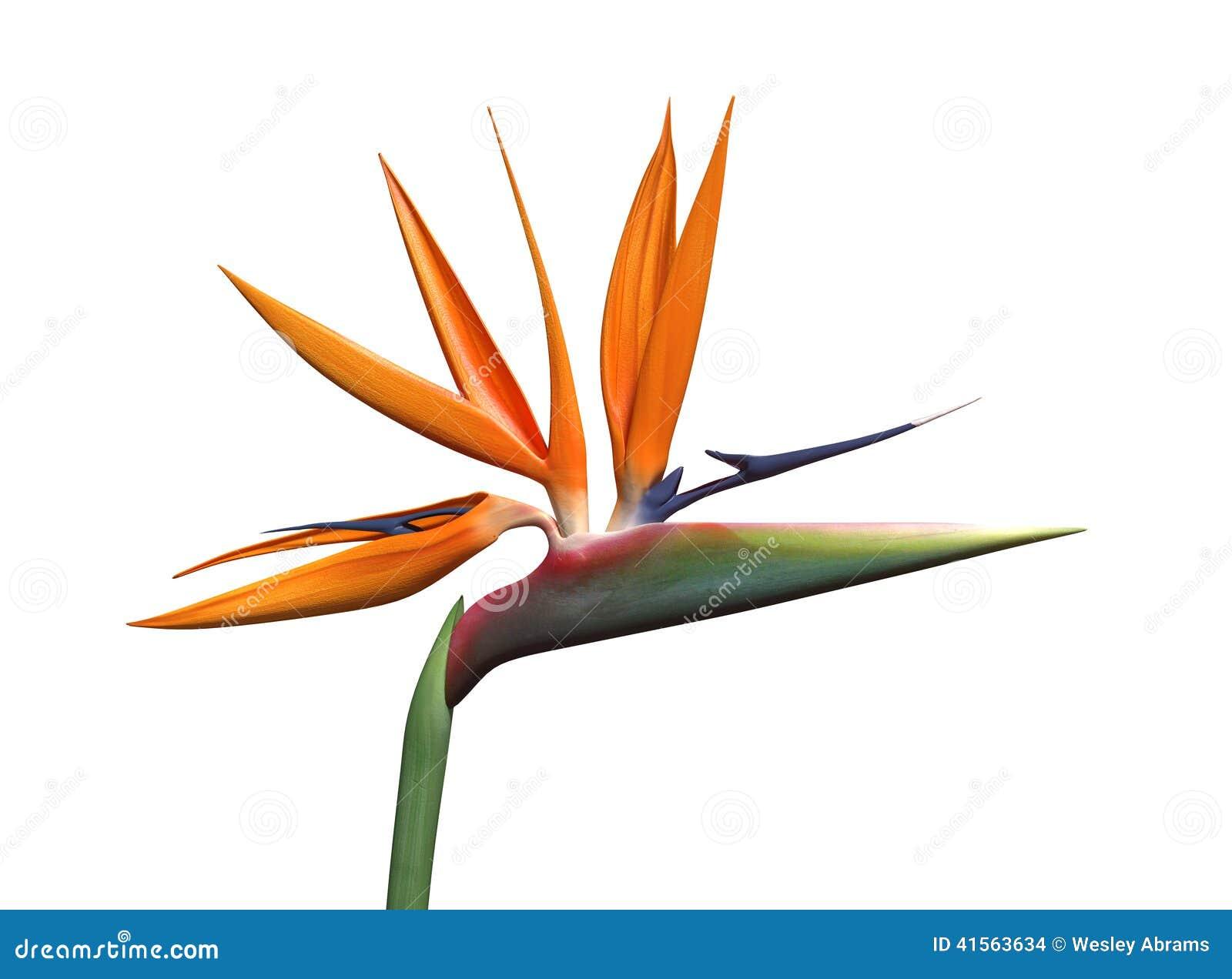 oiseau de fleur de paradis illustration stock image 41563634. Black Bedroom Furniture Sets. Home Design Ideas