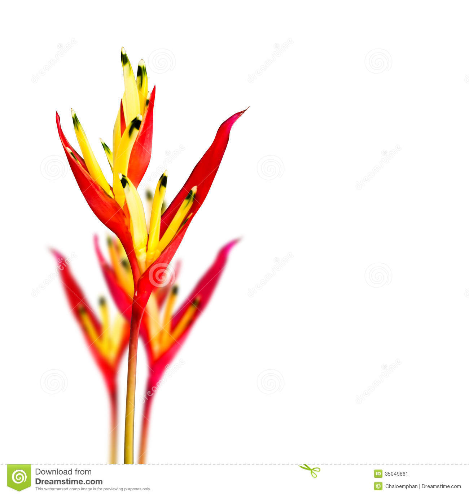 oiseau de fleur du paradis tropical image stock image 35049861. Black Bedroom Furniture Sets. Home Design Ideas