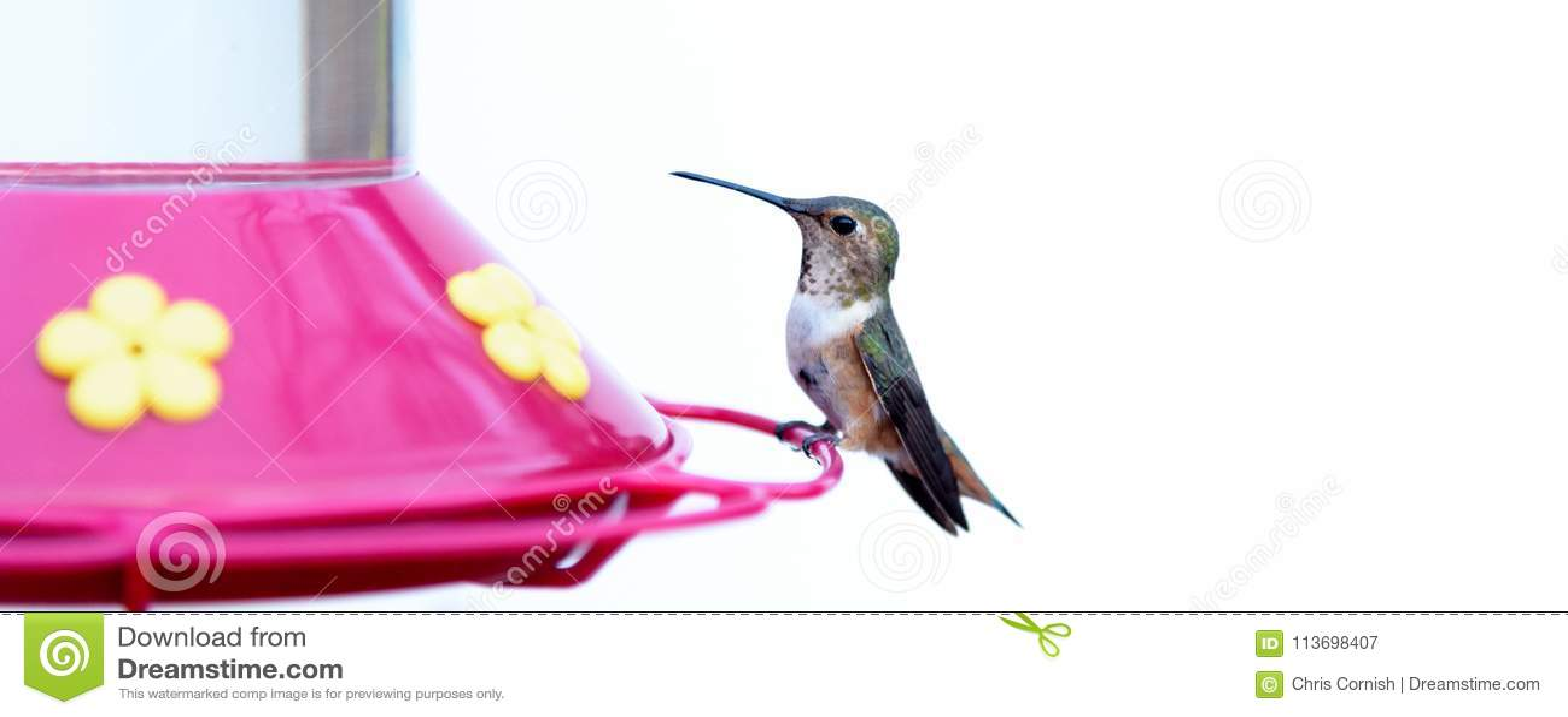 Oiseau de ronflement
