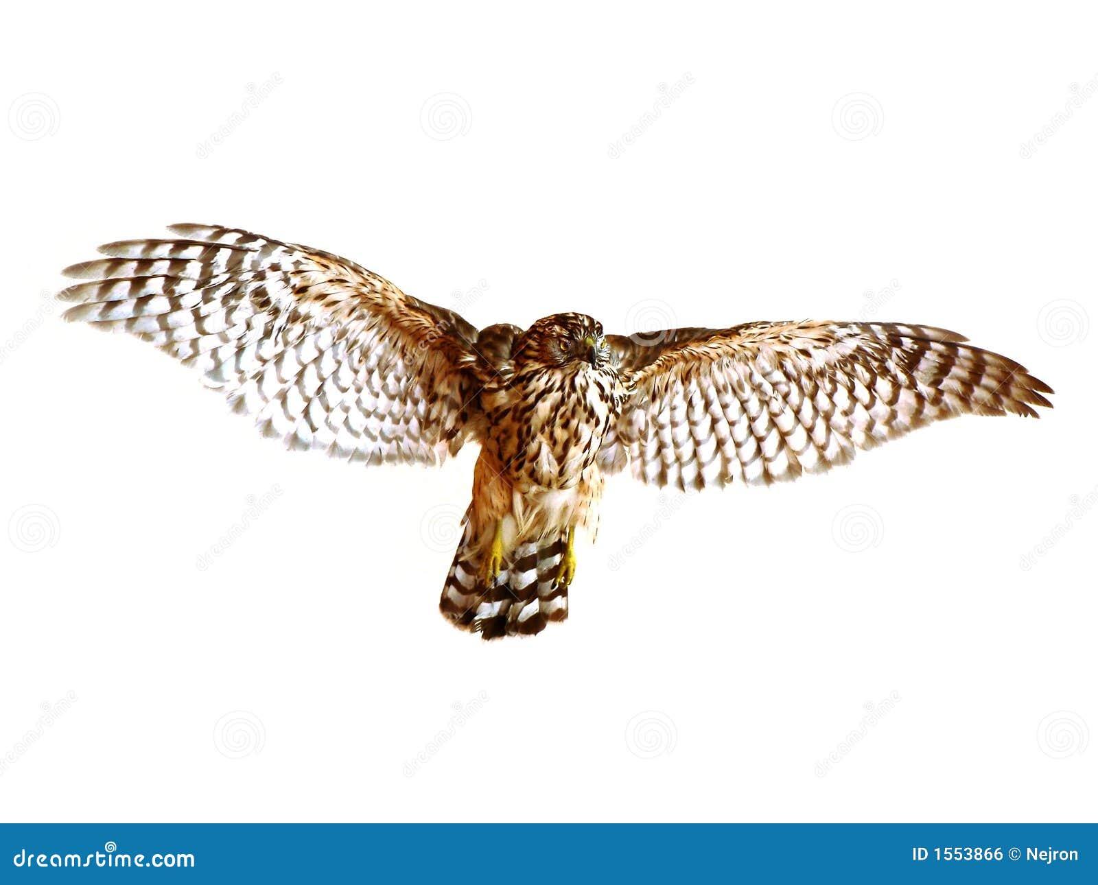 Oiseau de vol
