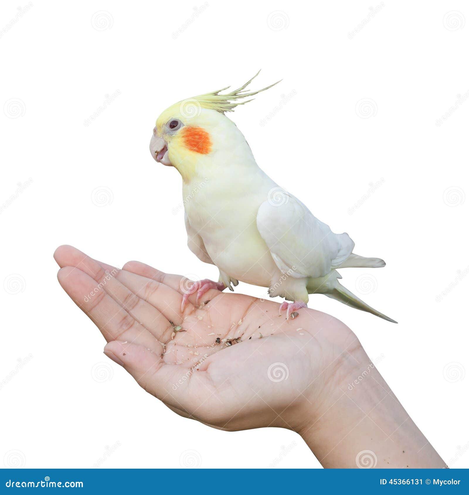 Oiseau en main