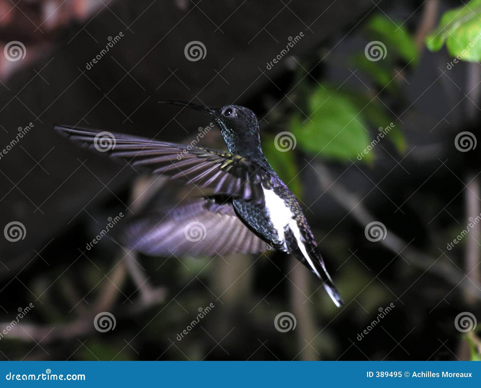 Oiseau en vol 1 de ronflement