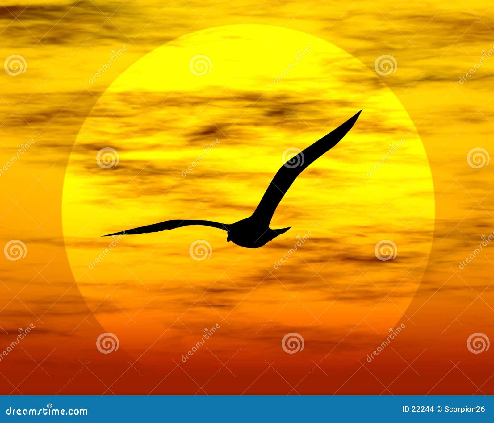 Oiseau et soleil