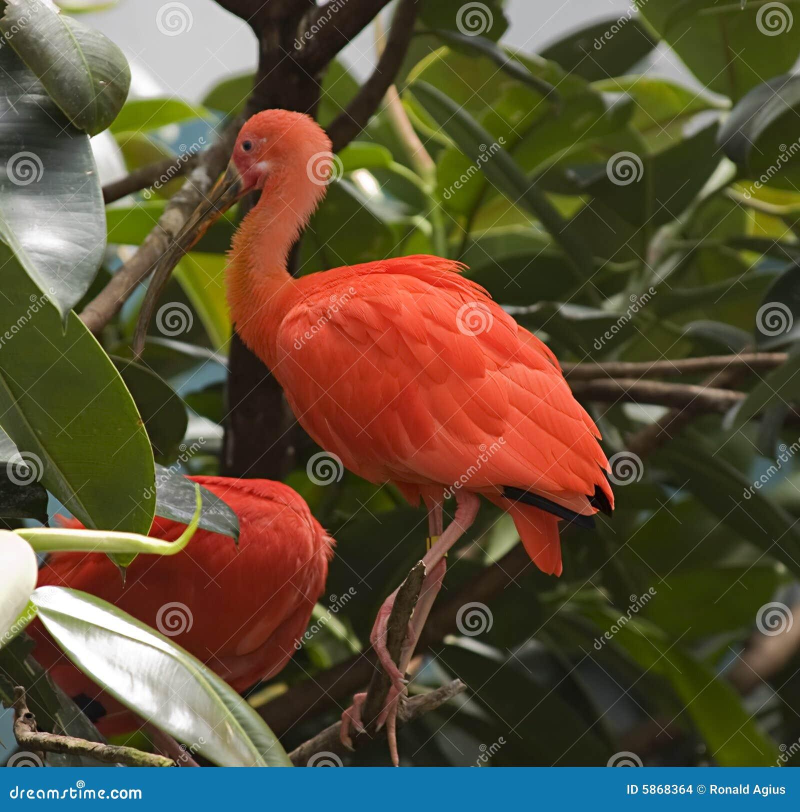Oiseau exotique orange images stock image 5868364 for Oiseau bleu et orange