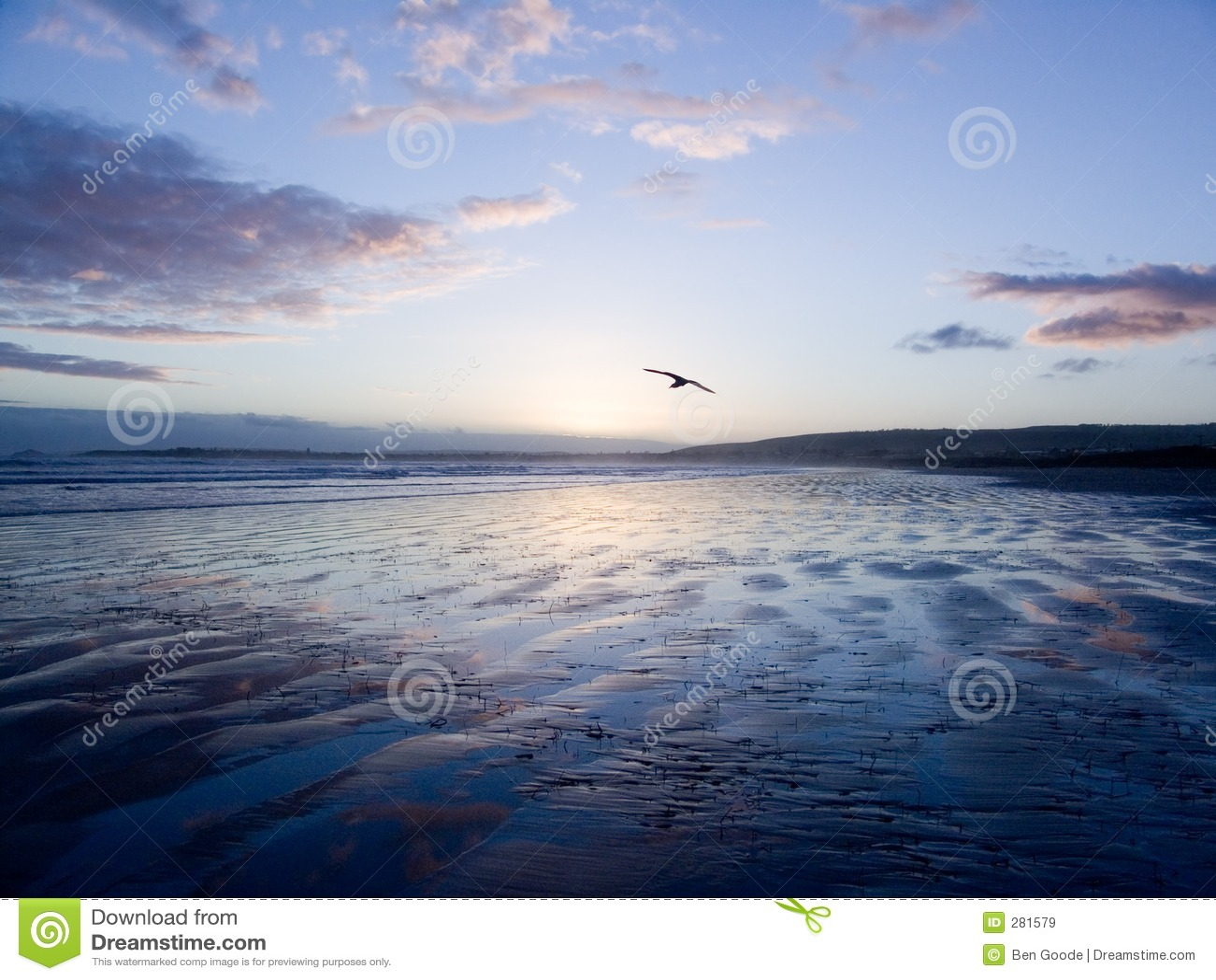Oiseau glissant au-dessus du sable