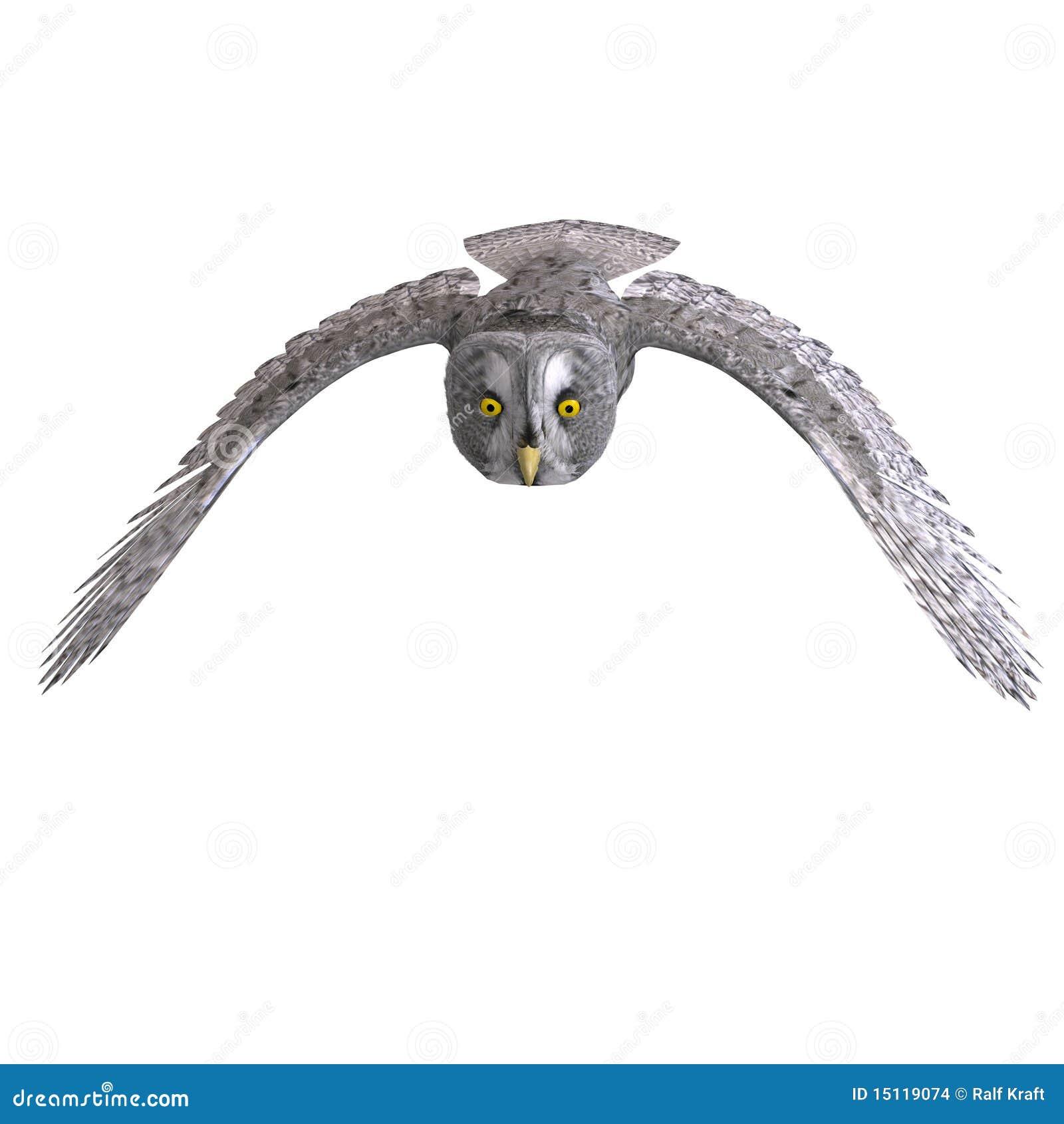 Oiseau gris de hibou