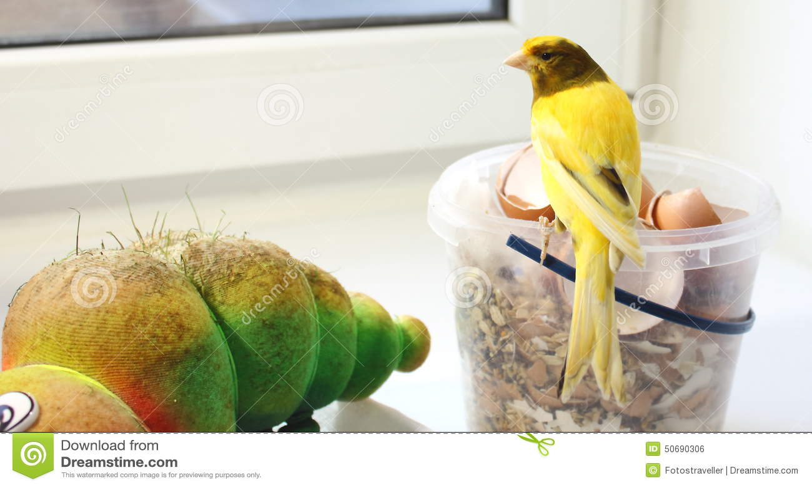Oiseau jaune canari