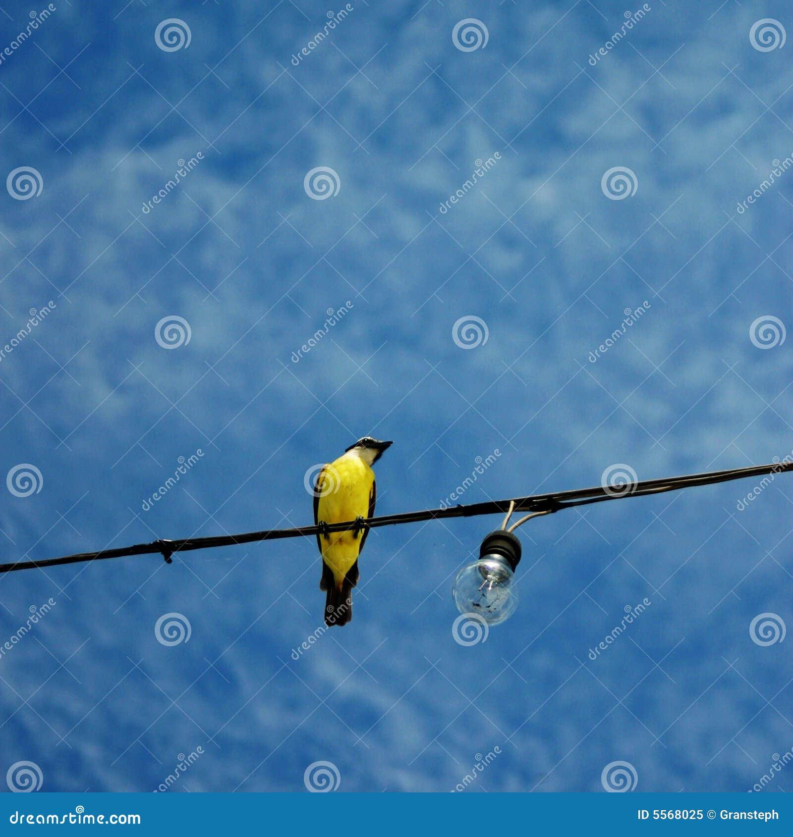 oiseau jaune sous un ciel bleu photo libre de droits image 5568025. Black Bedroom Furniture Sets. Home Design Ideas