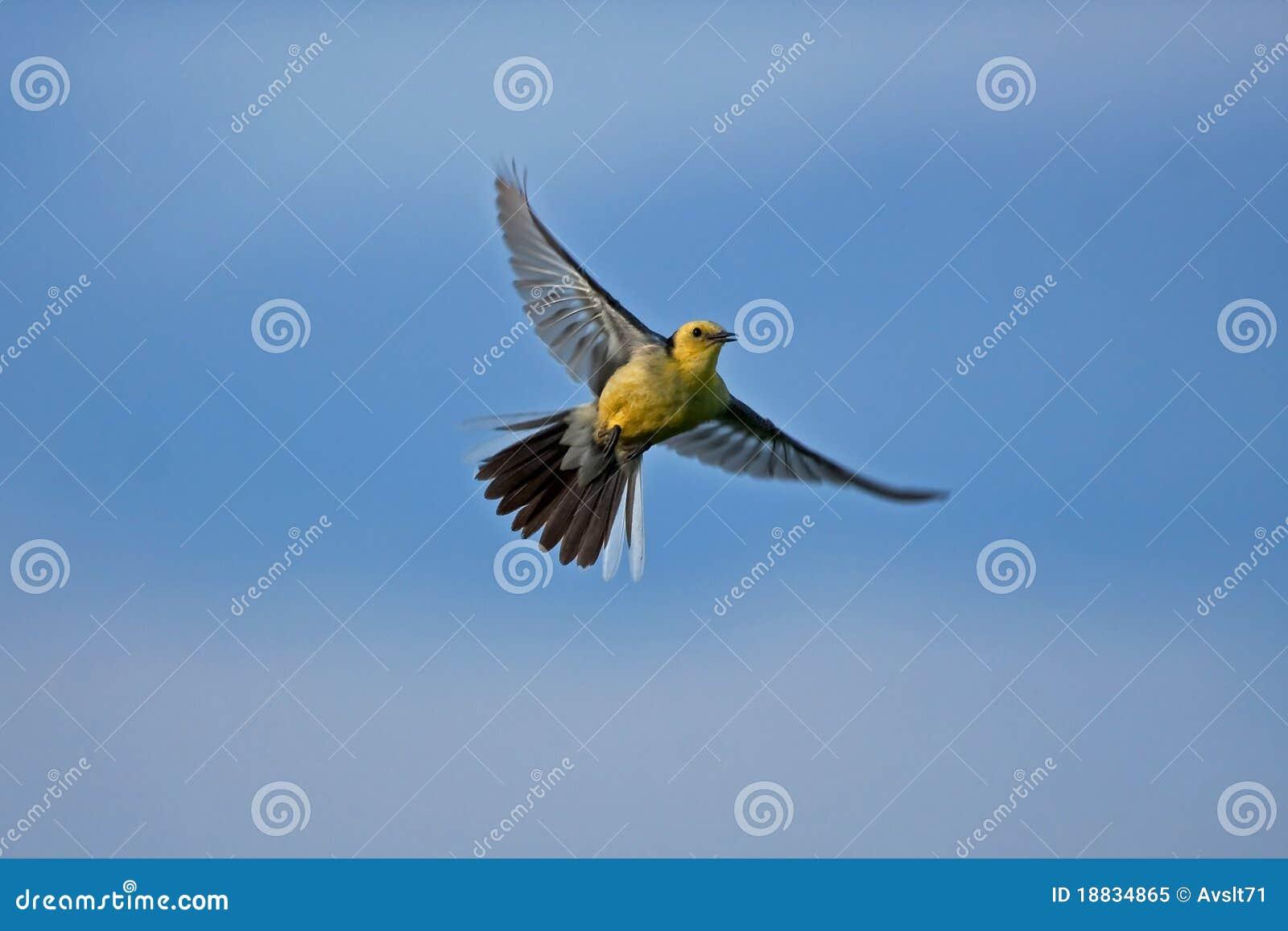 oiseau jaune sur le ciel bleu image stock image du sunlight oiseaux 18834865. Black Bedroom Furniture Sets. Home Design Ideas