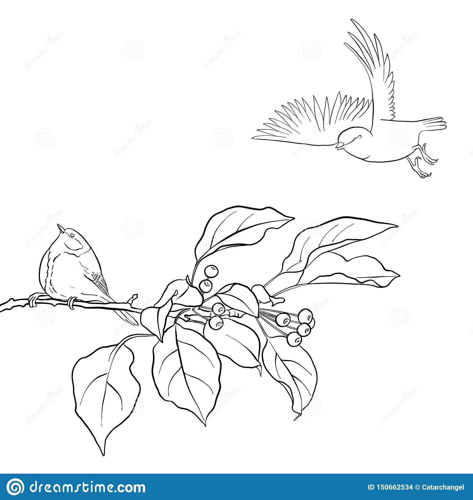 Oiseau La Branche D Arbre Illustration De Vecteur Illustration