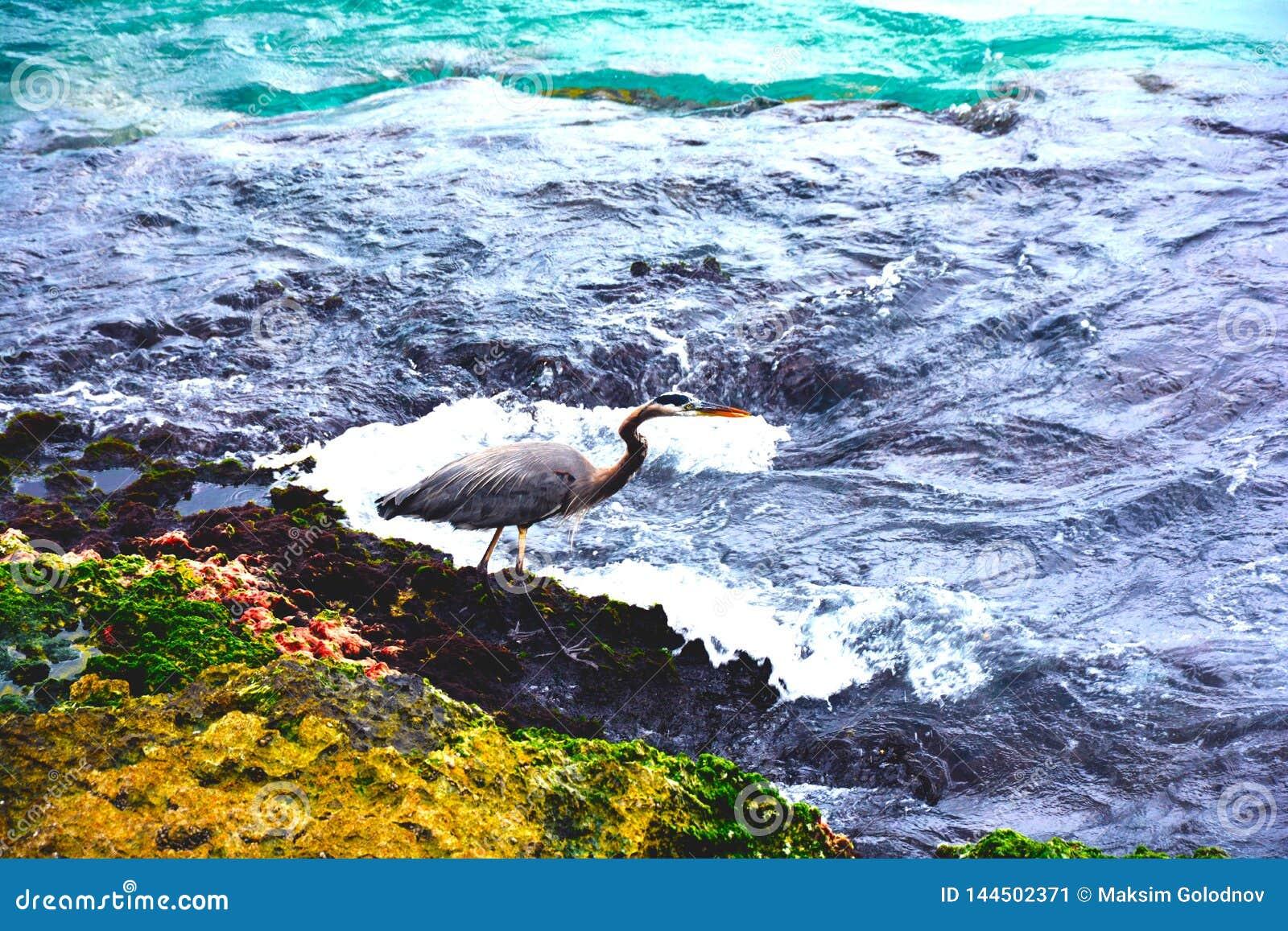 Oiseau par l océan avec des vagues