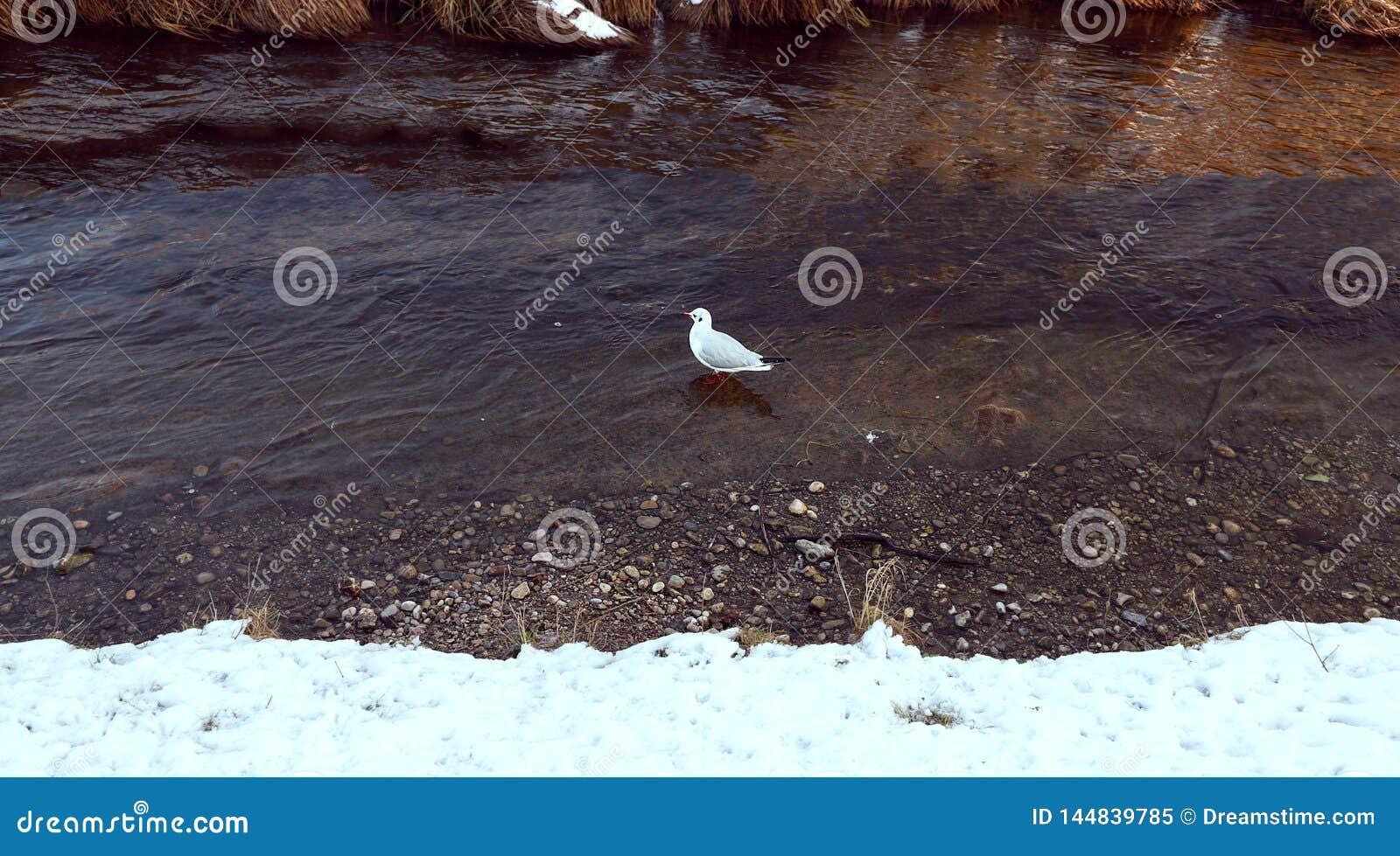 Oiseau par le lac en hiver