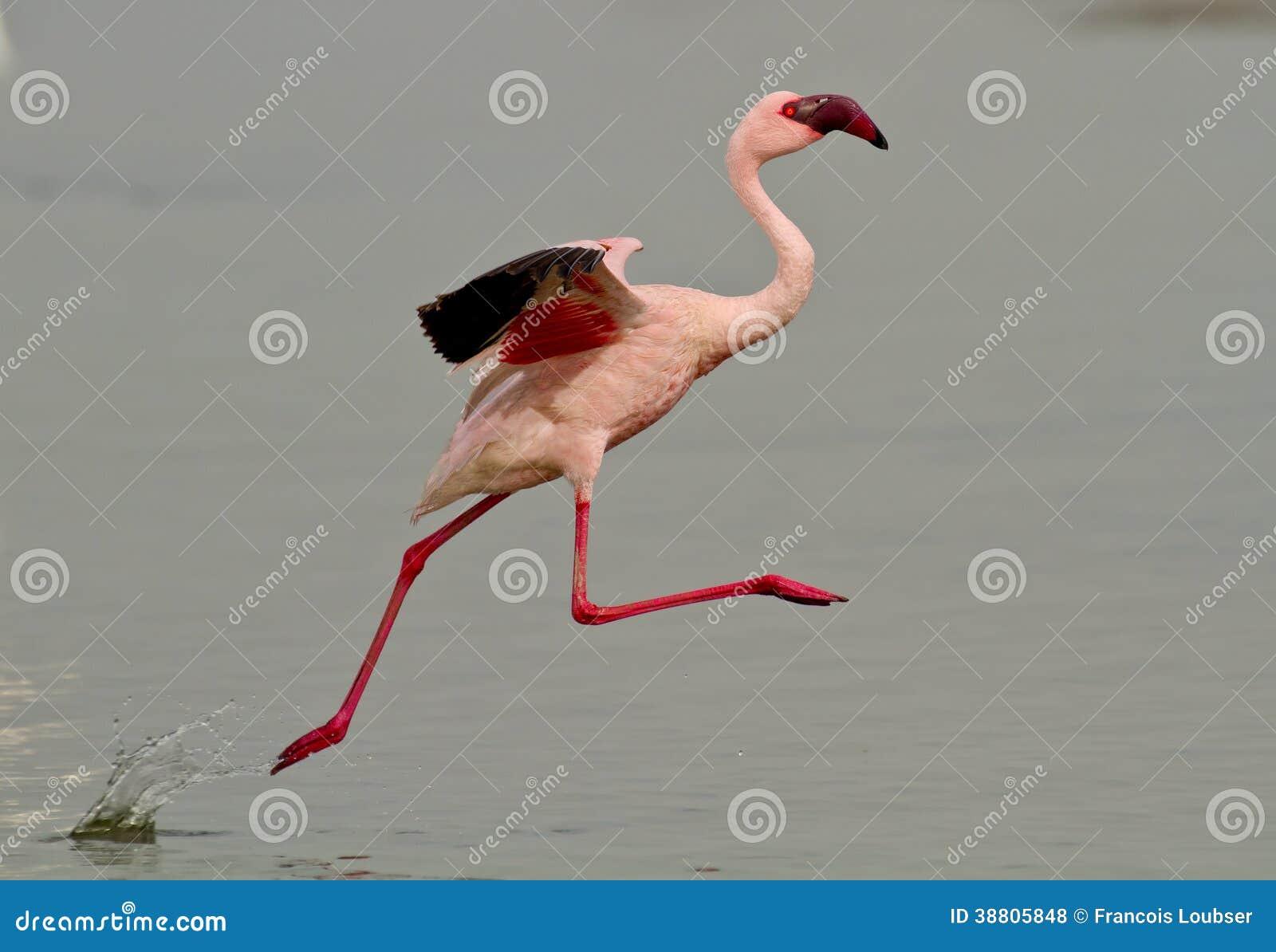 Oiseau rose de flamant