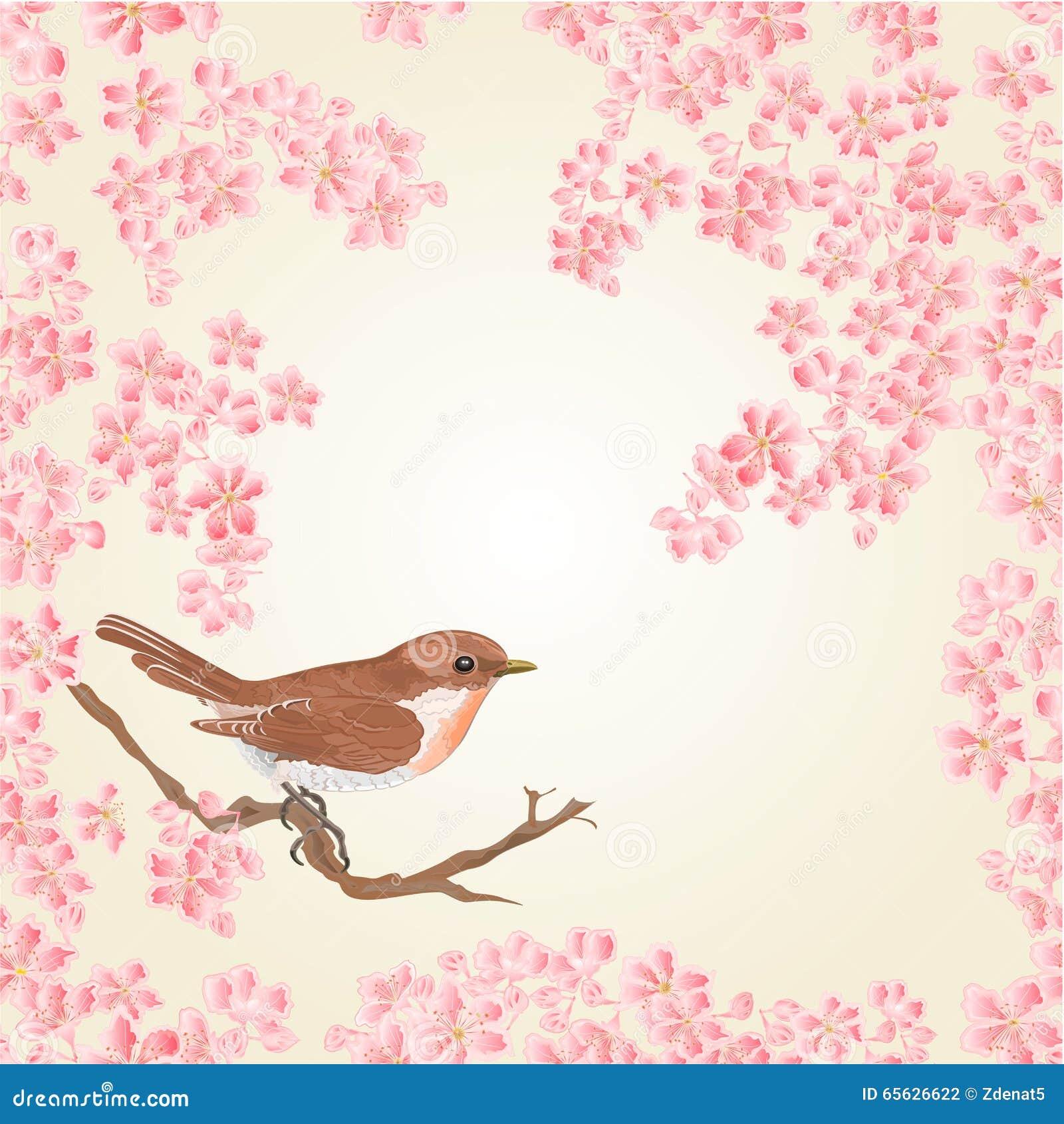 Oiseau sans couture de texture et vecteur de Sakura