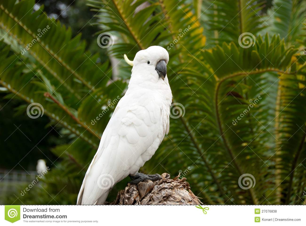 Oiseau sauvage blanc de cockatoo dans la jungle photo for Oiseau tout blanc