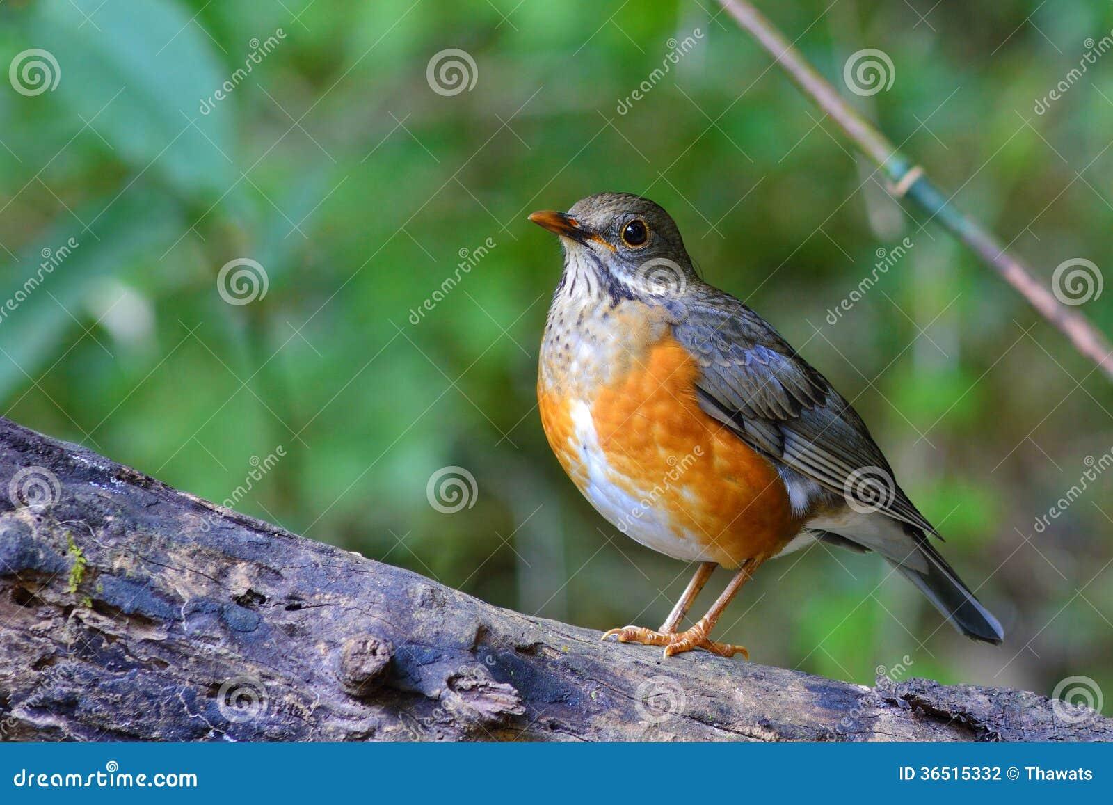 Oiseau soutenu par gris de grive
