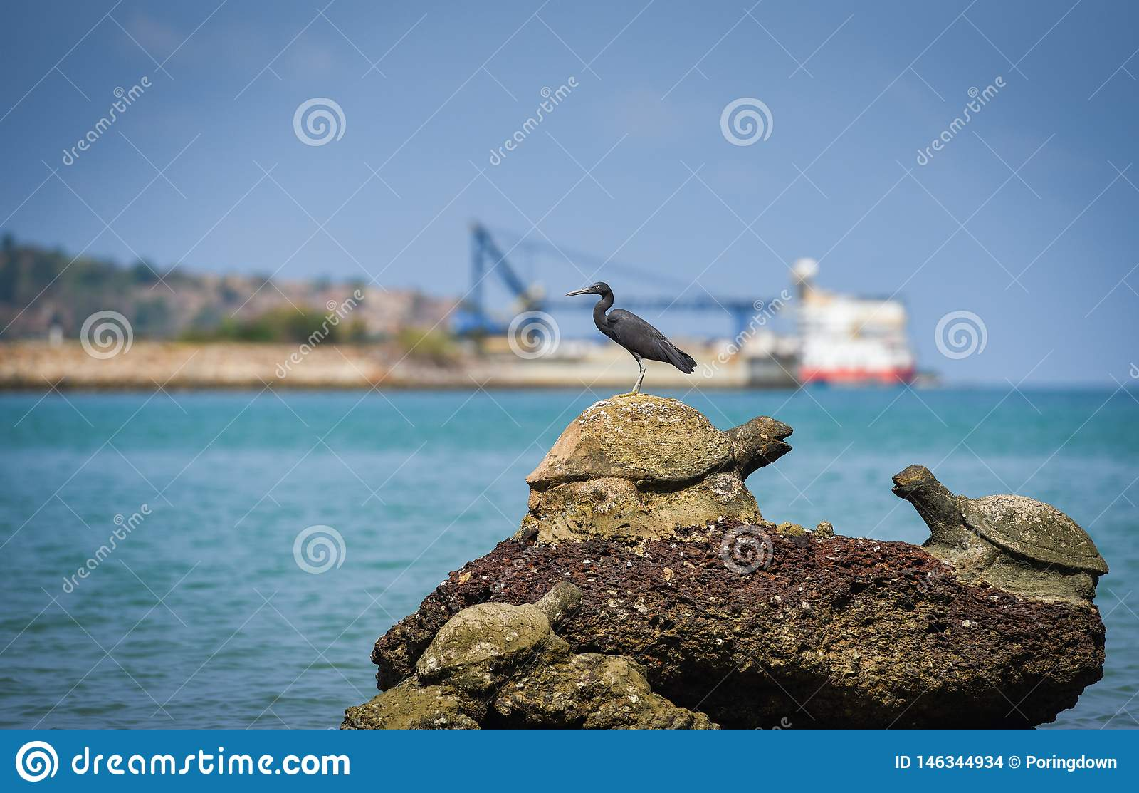 Oiseau sur les roches au fond de bateau de pêche d océan de mer de côte de baie