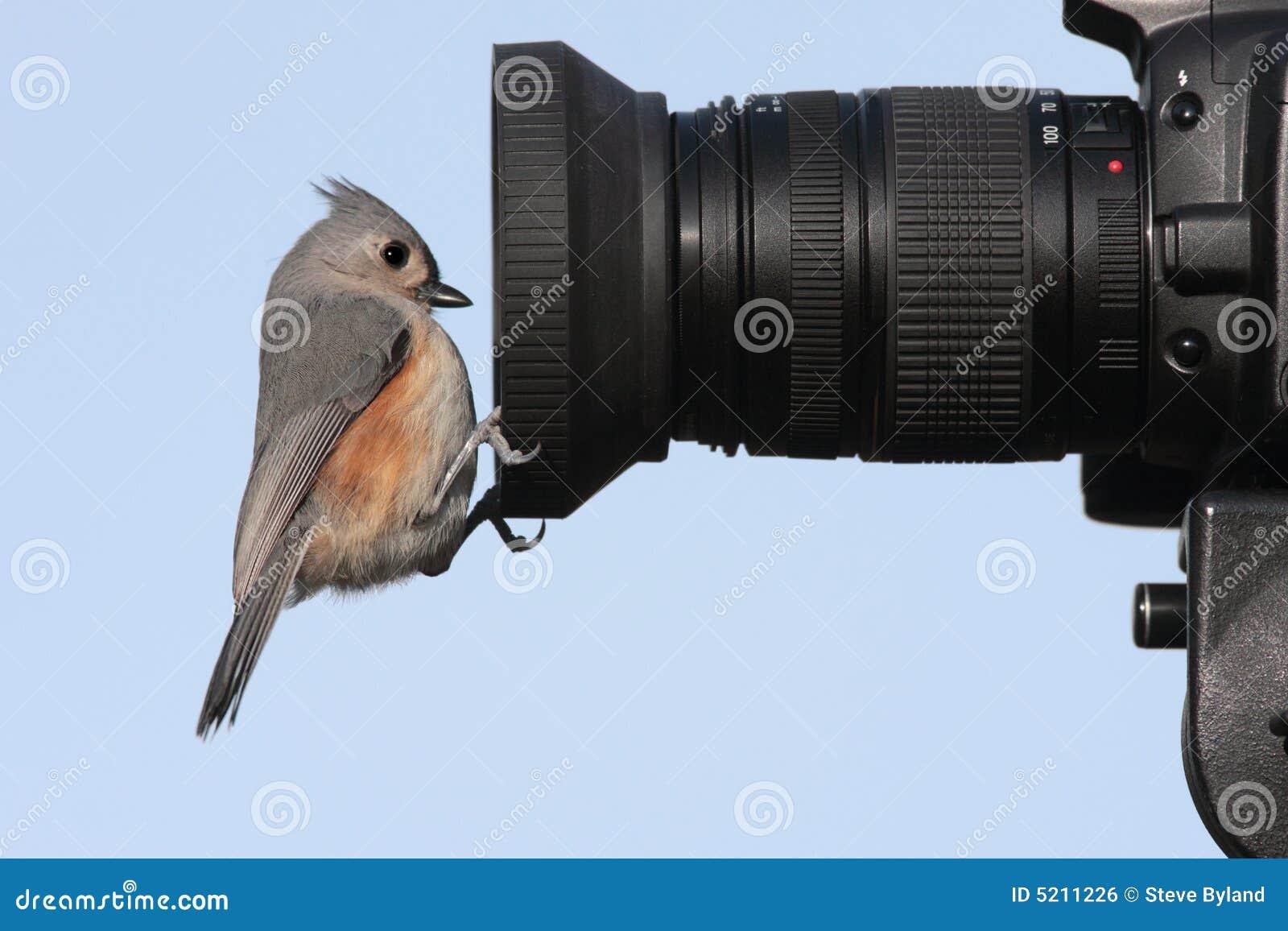 Oiseau sur un appareil-photo
