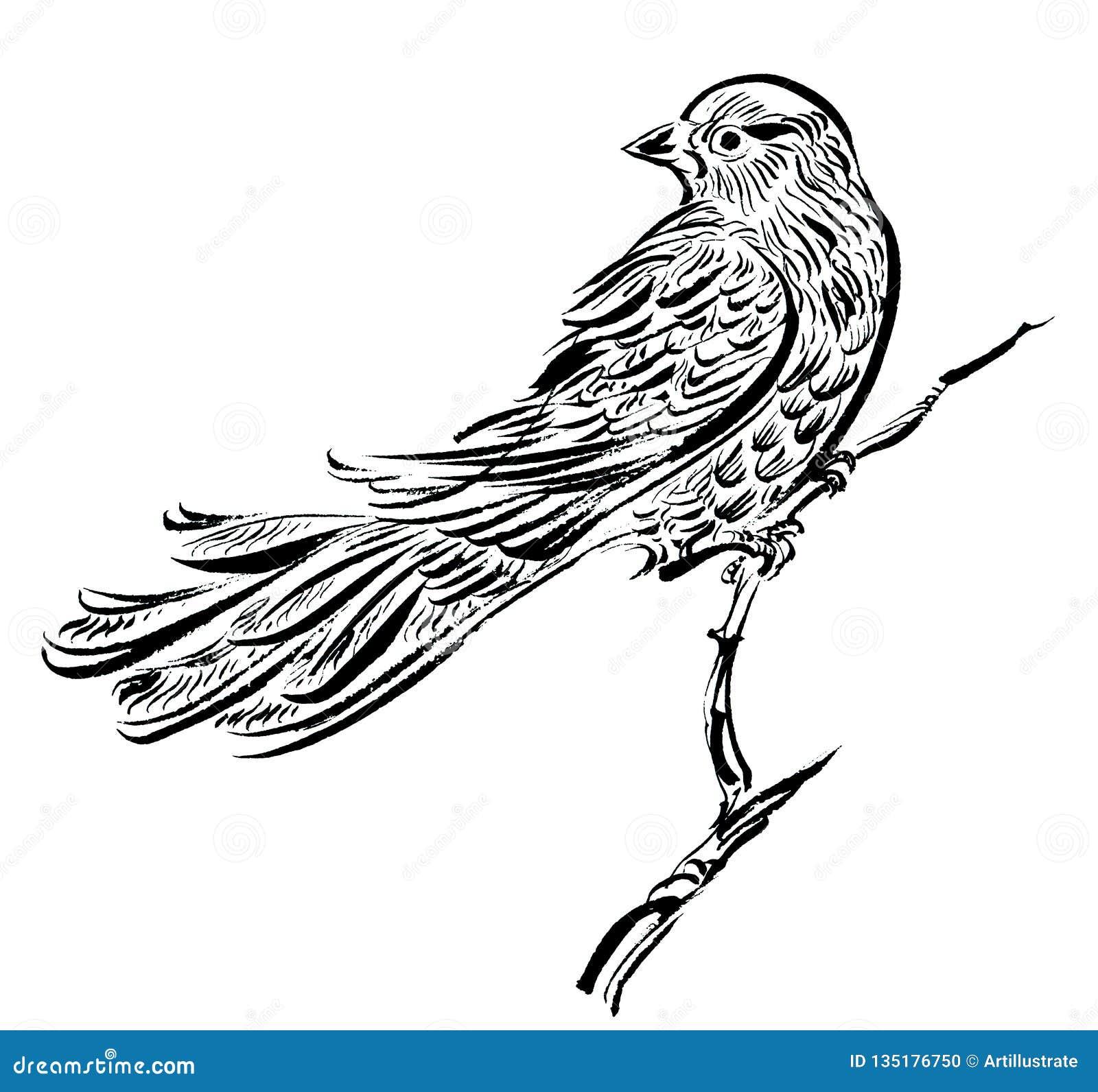 Oiseau Sur Une Branche Affiche De Dessin D Encre Illustration