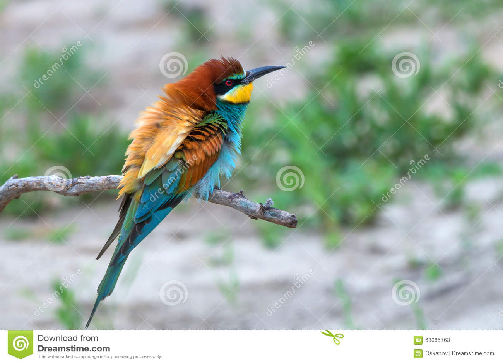 Download Oiseau tropical image stock. Image du abondant, branchement - 63085763