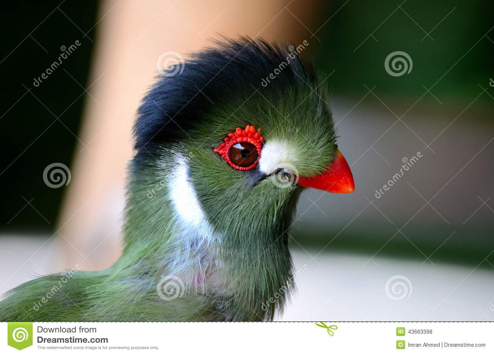 Oiseau vert sensible avec les corrections blanches de bec for Oiseau bec rouge