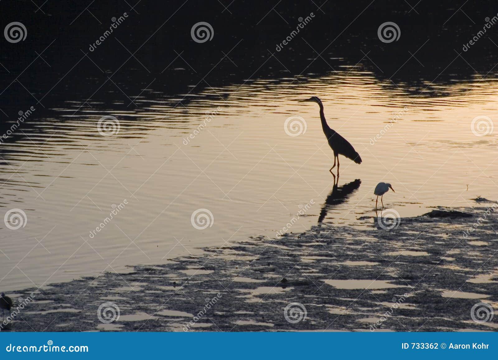 Oiseaux 2 d estuaire