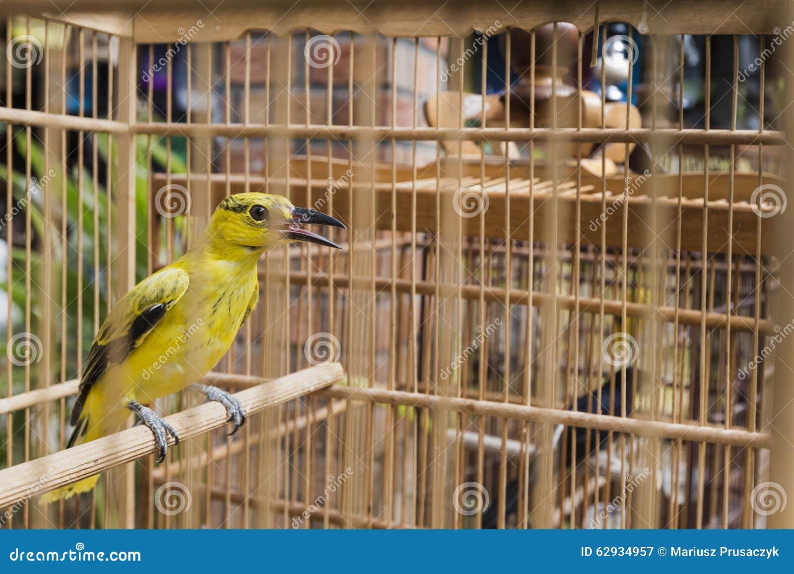 oiseaux color s vendre au march d 39 oiseau yogyakarta java indon sie photo stock image. Black Bedroom Furniture Sets. Home Design Ideas