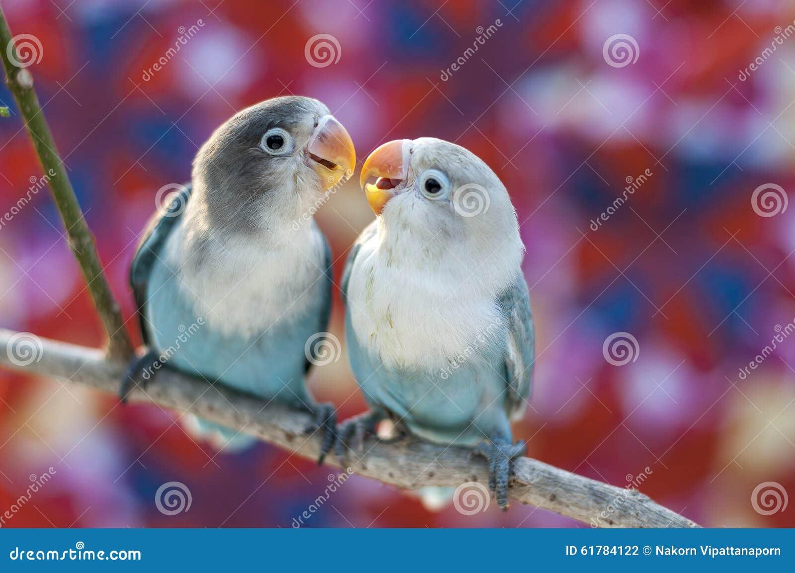 Oiseaux d amour et un arbre