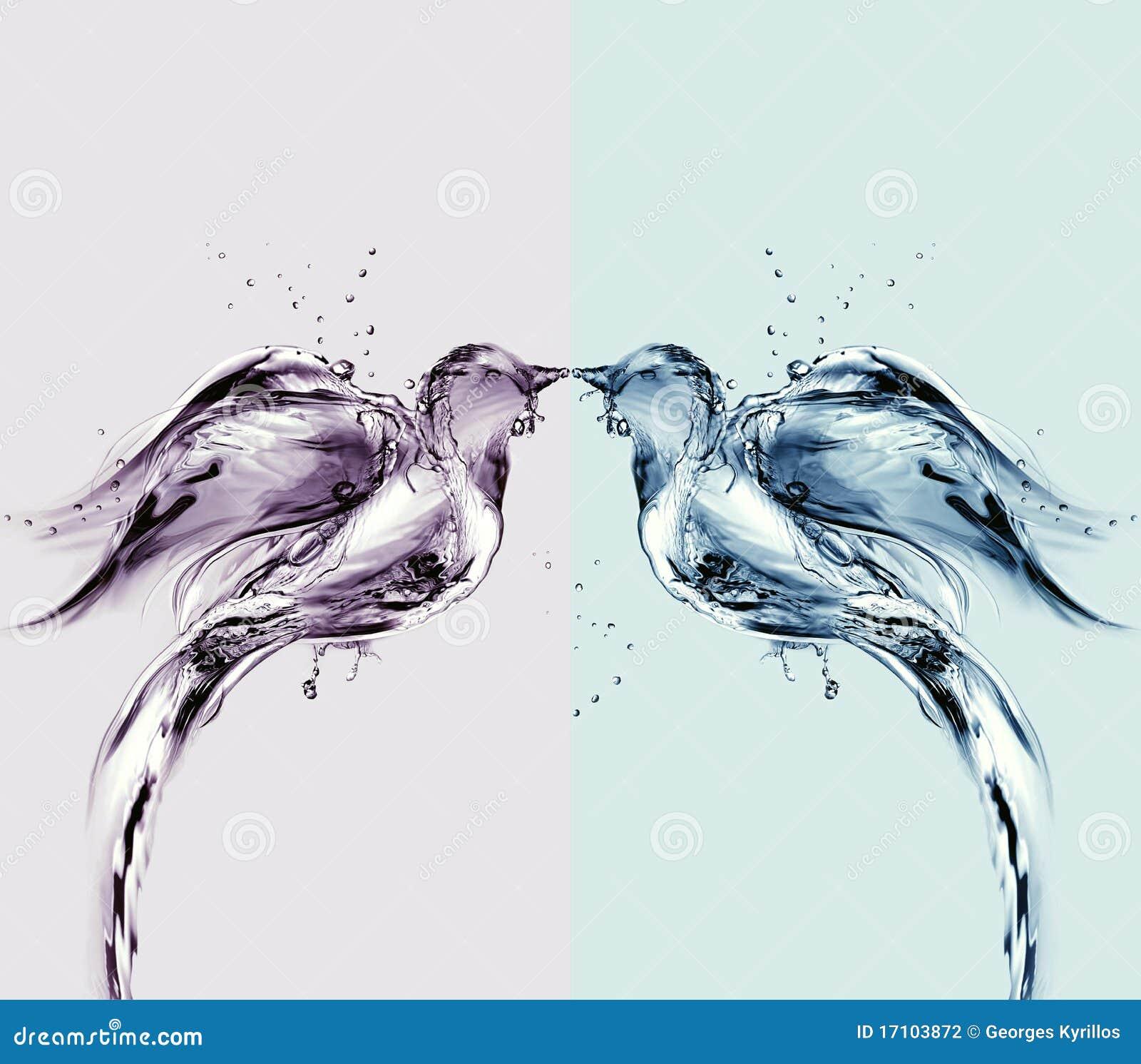 Oiseaux d eau colorés de l amour