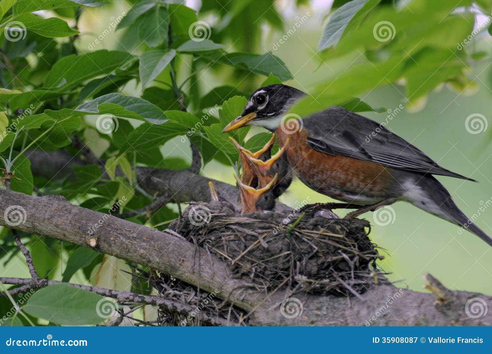 Oiseaux de bébé