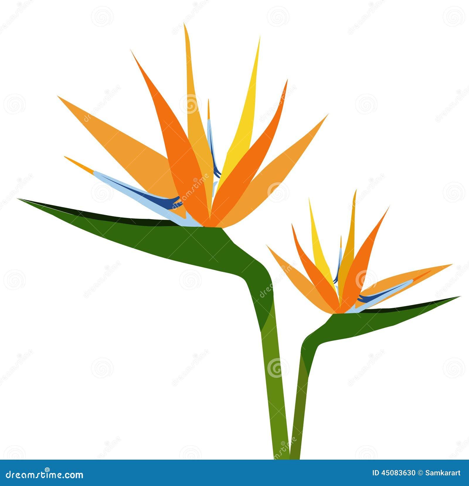 oiseaux de silhouette vecteur de fleur de paradis illustration de vecteur image 45083630. Black Bedroom Furniture Sets. Home Design Ideas