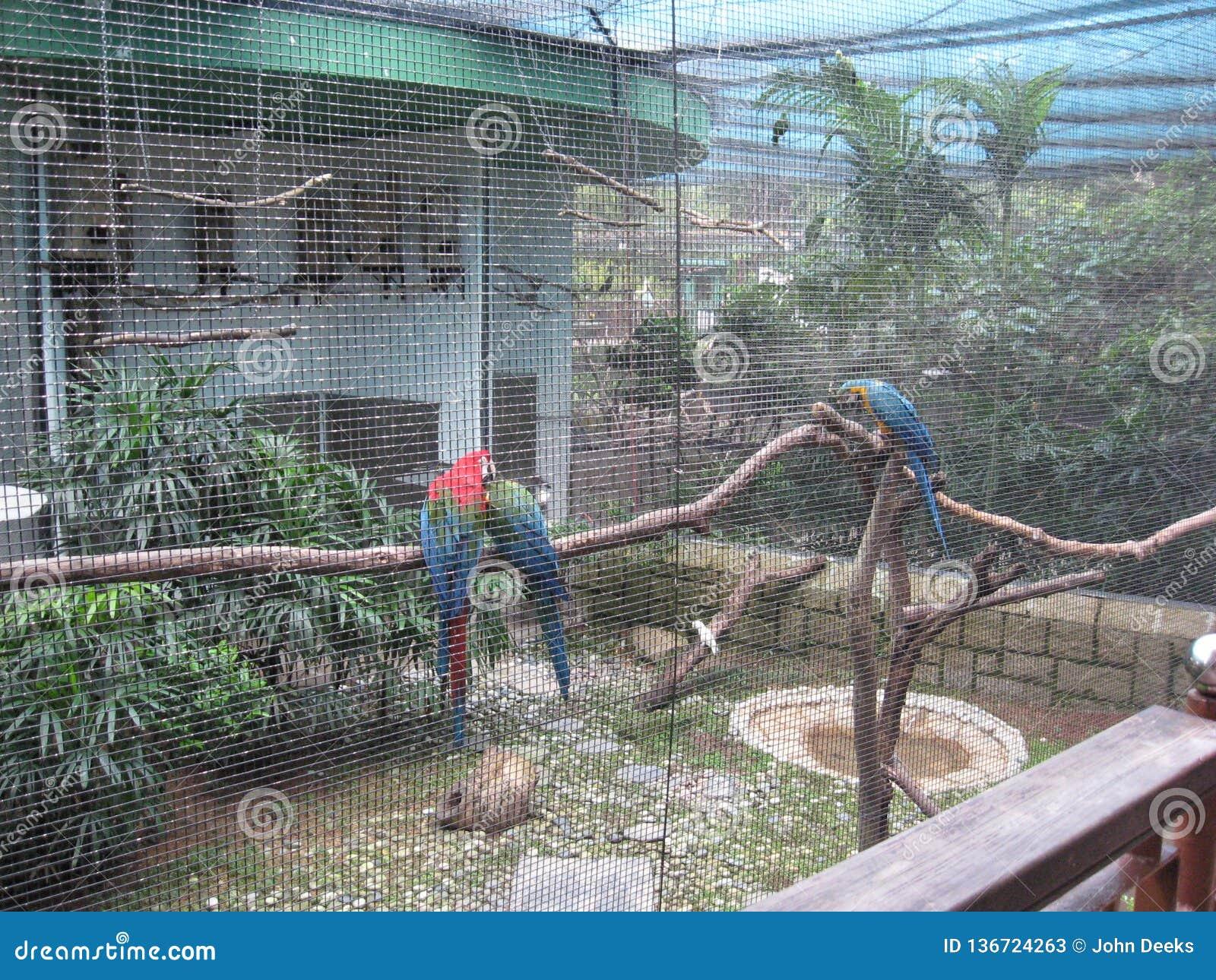 Oiseaux exotiques à la volière, parc de Kowloon, Hong Kong