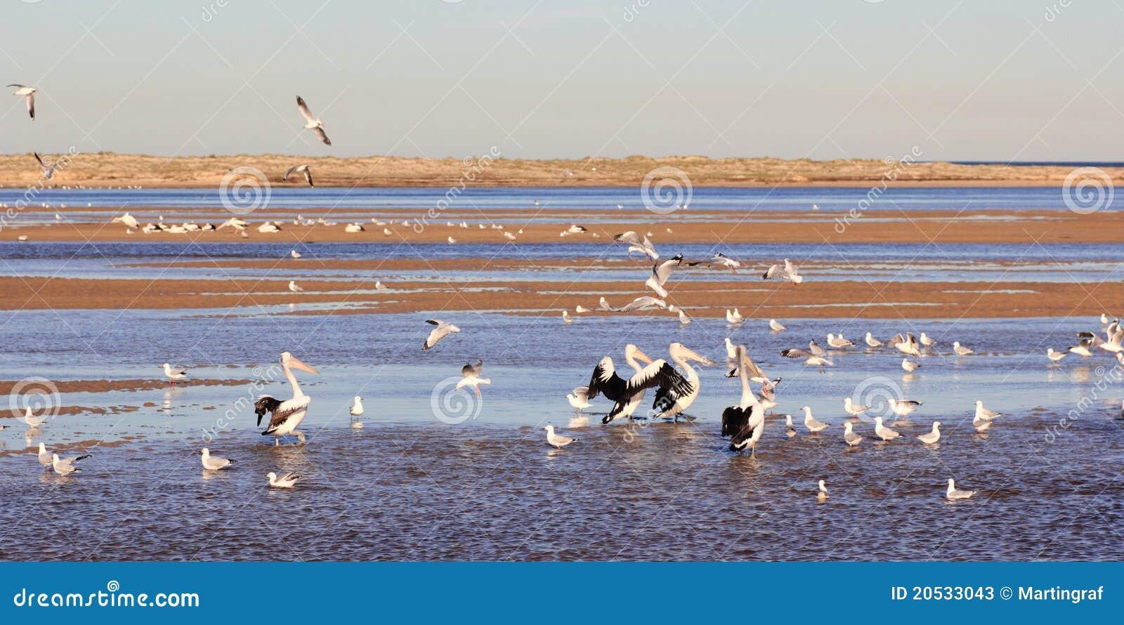 Oiseaux marins au lac côtier
